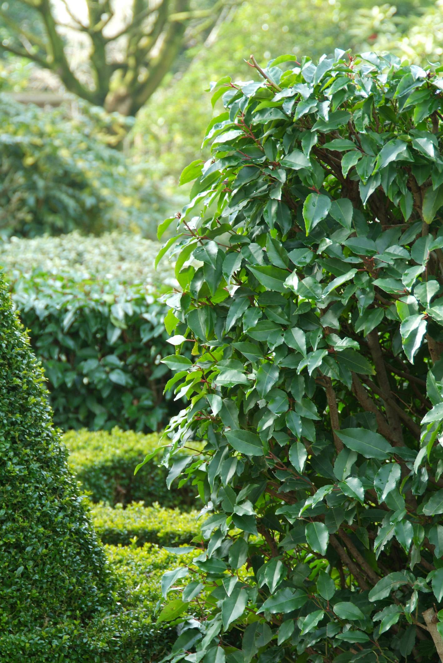 Planter Une Bordure De Buis trouver une alternative aux buis | gamm vert