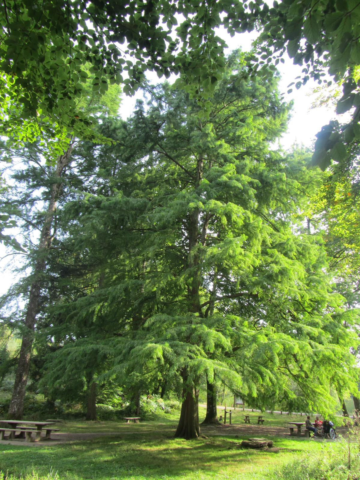 Se Cacher Des Voisins Dans Son Jardin choisir son arbre persistant | gamm vert