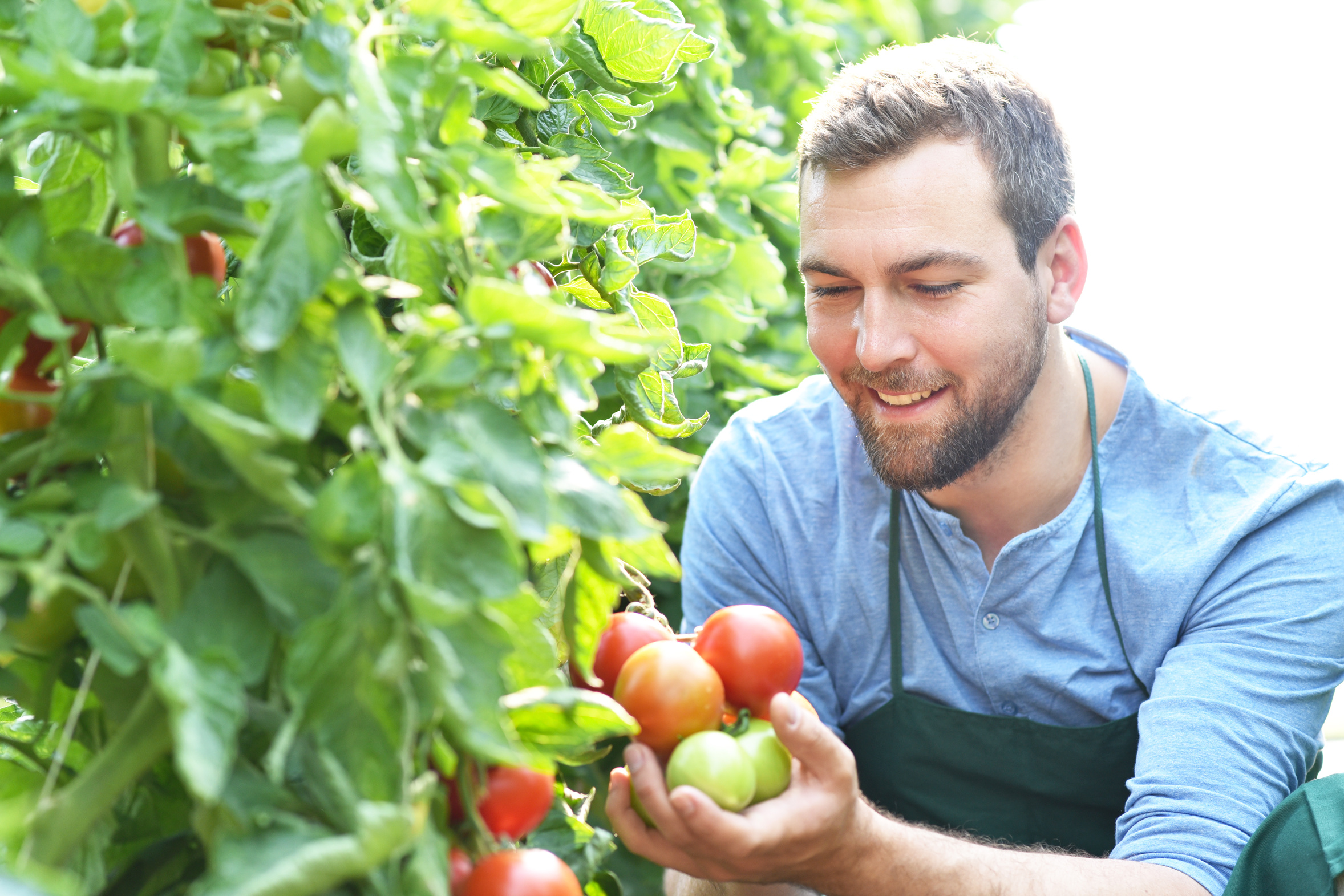 Quoi Mettre Au Potager En Septembre jardin en juillet - calendrier du potager | gamm vert