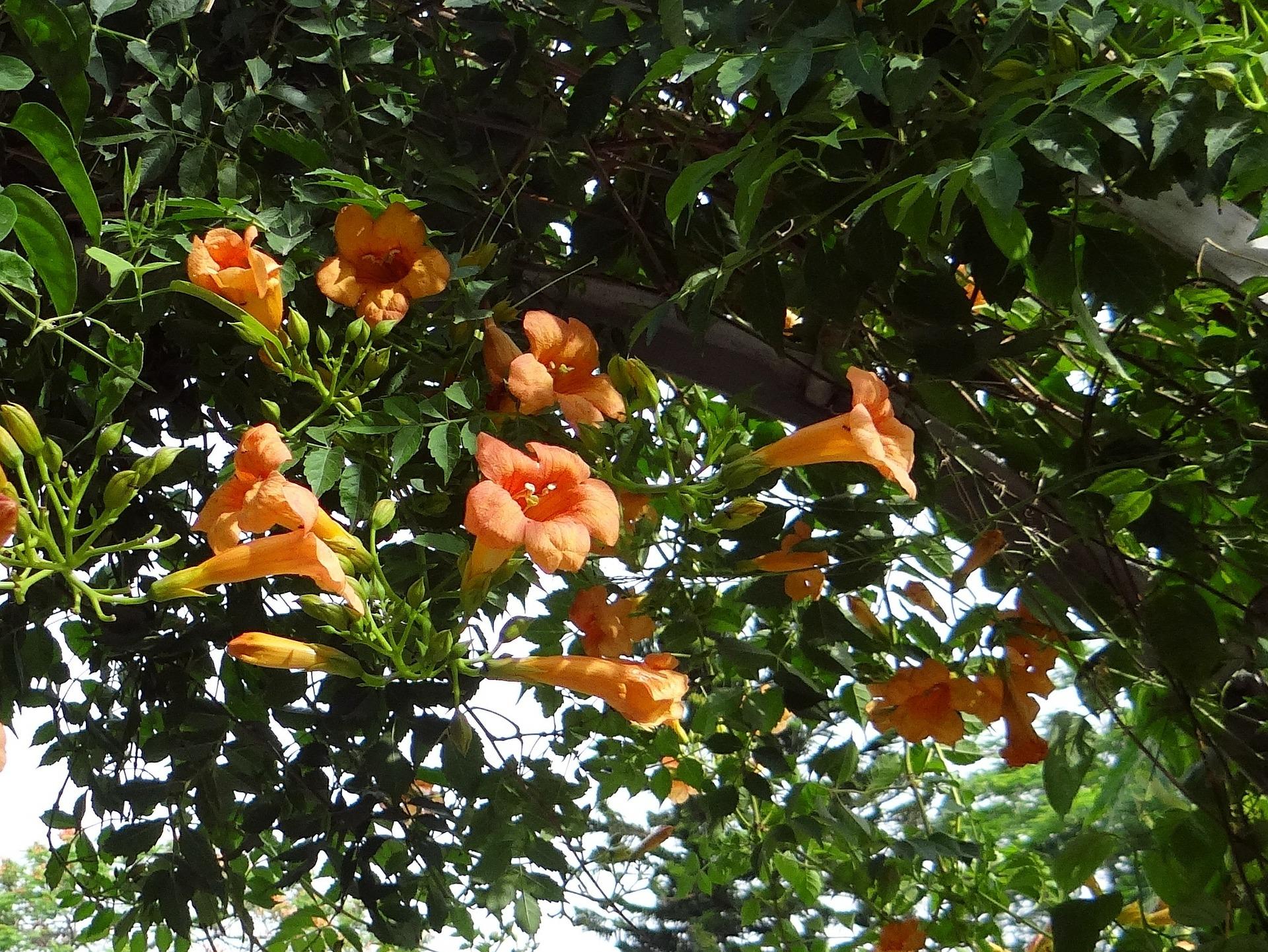 Arbuste Terrain Sec Ombre 12 plantes qui ne craignent pas la sécheresse | gamm vert