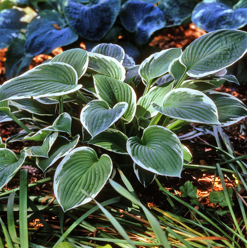 Quoi Planter Dans Une Terre Argileuse jardiner en terre argileuse | gamm vert