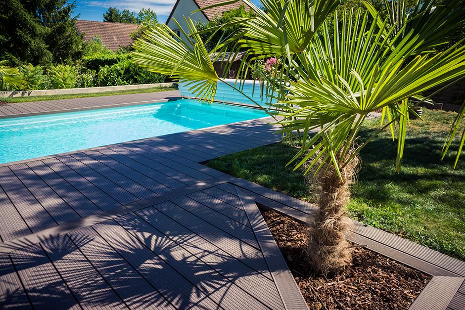 Choisir son palmier d\'extérieur | Gamm vert