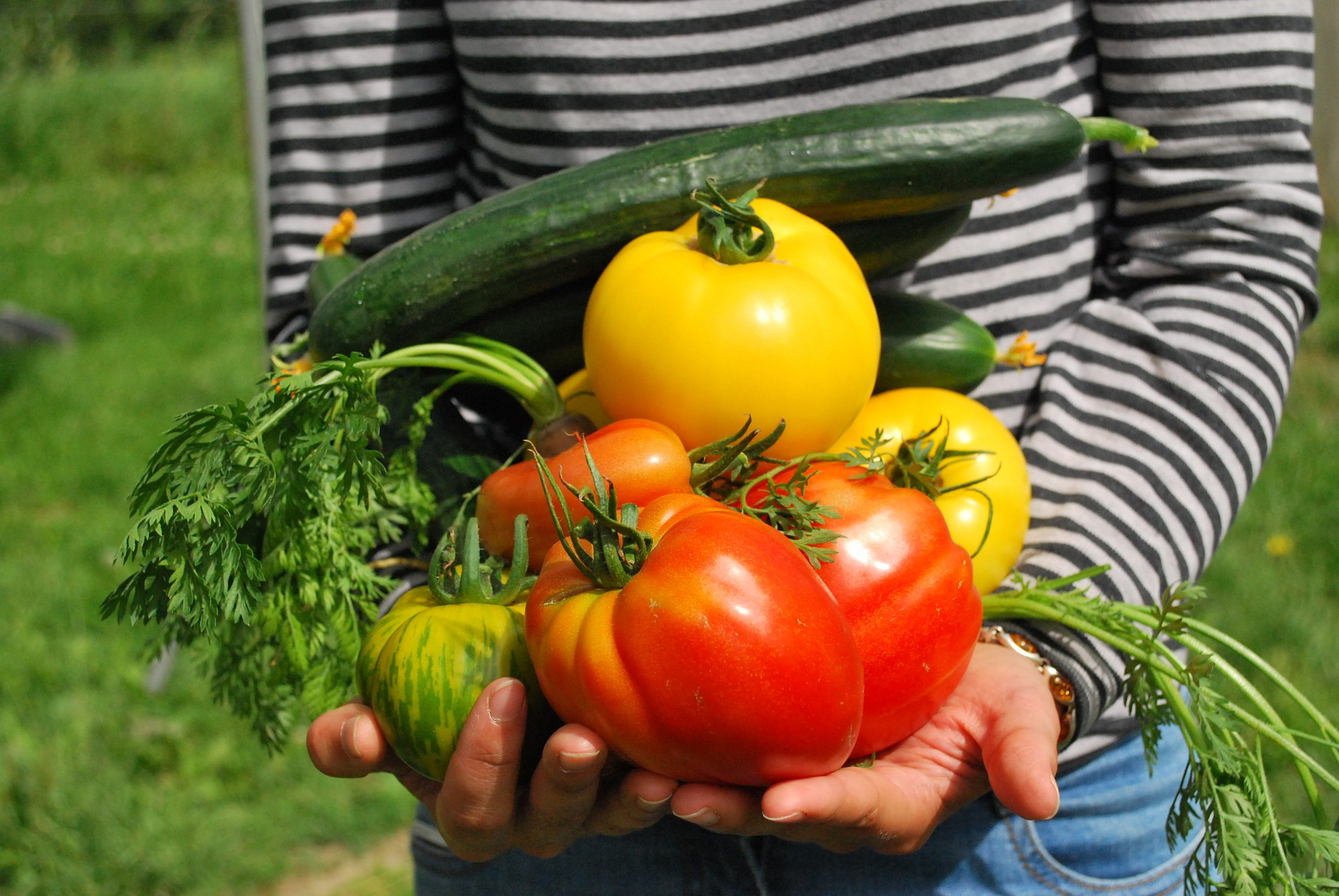 Un Petit Potager Productif trucs d'experts pour potager productif | gamm vert
