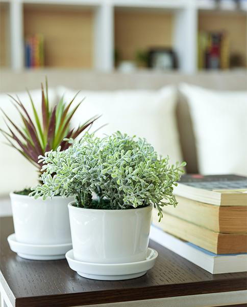 13 Plantes Dintérieur Increvables Gamm Vert