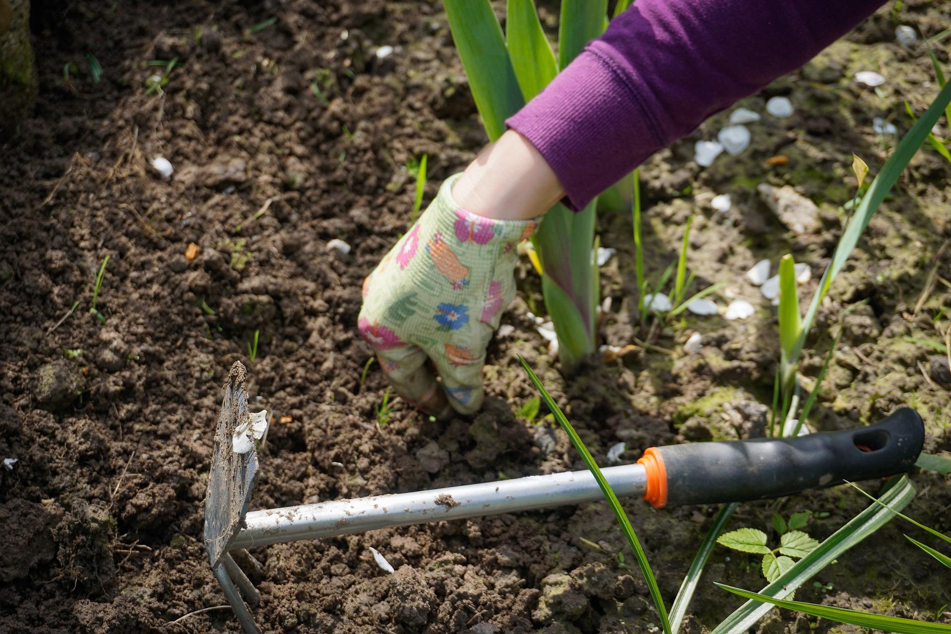 Comment Se Débarrasser Des Bambous Dans Le Jardin les 5 outils indispensables pour désherber | gamm vert