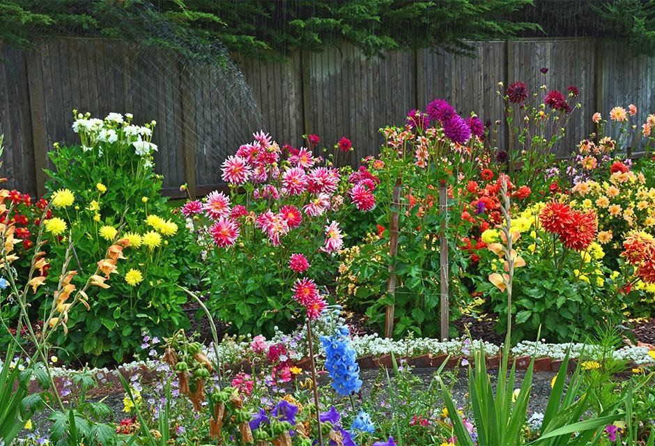 Planter et cultiver les bulbes d'été : dahlia, canna ...