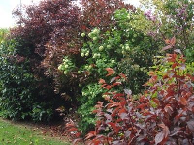 Haie De Troene Jardin : Une haie champ�tre tr�s d�corative sc�nes de jardins