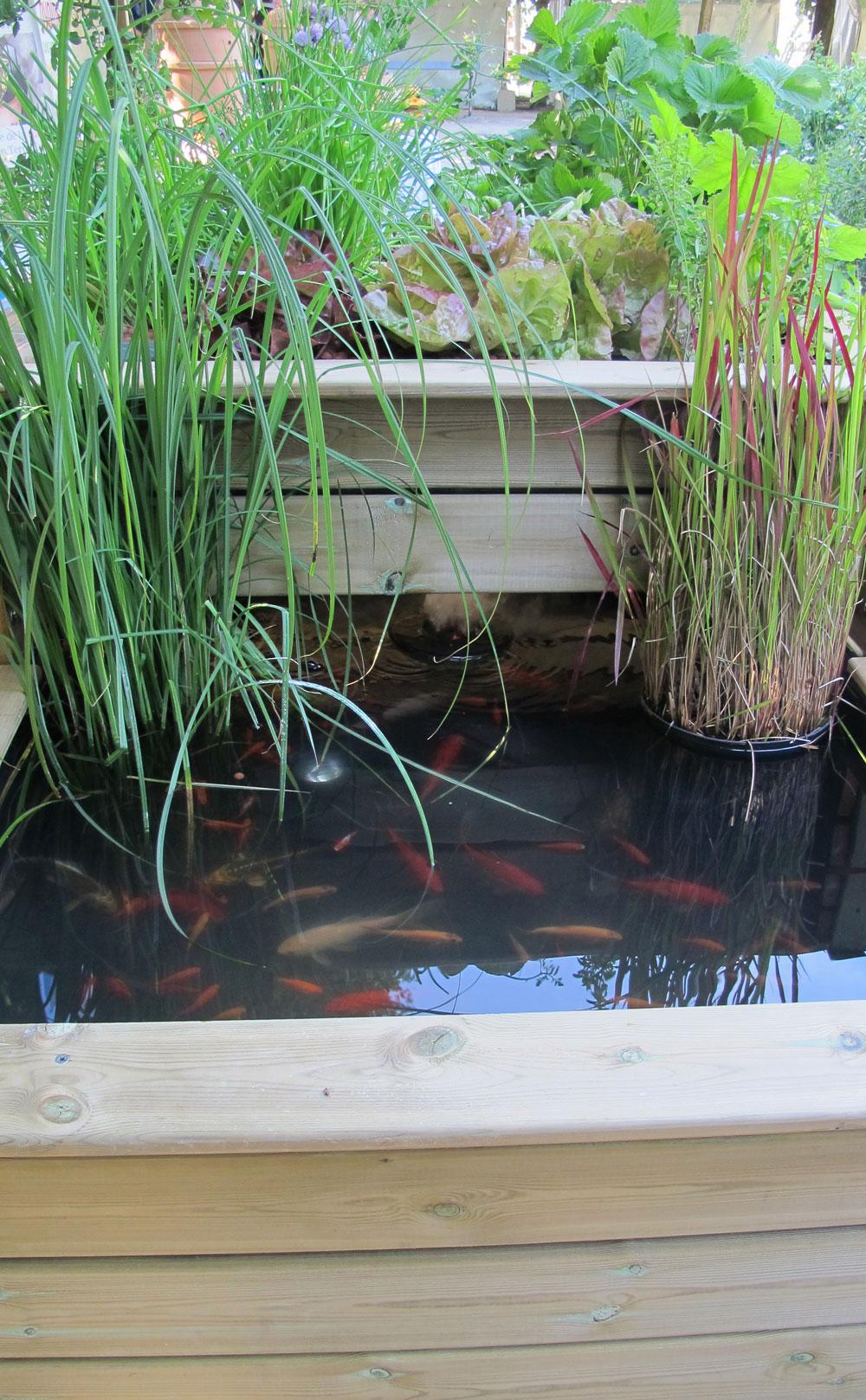 Bassin Poisson Hors Sol l'aquaponie ou l'art de marier potager et bassin | gamm vert