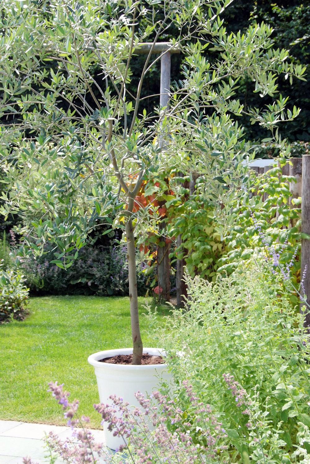 Cultiver Un Arbre En Pot Gamm Vert