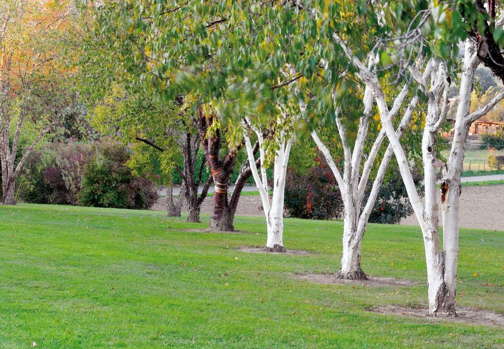 Le jardin du bois marquis promenades for Jardin bois