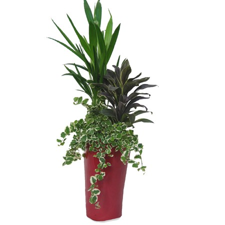 Composition plante interieur - Pot plante interieur ...