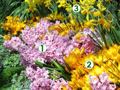 bulbes de printemps au jardin associations de couleurs douces sc nes de jardins. Black Bedroom Furniture Sets. Home Design Ideas