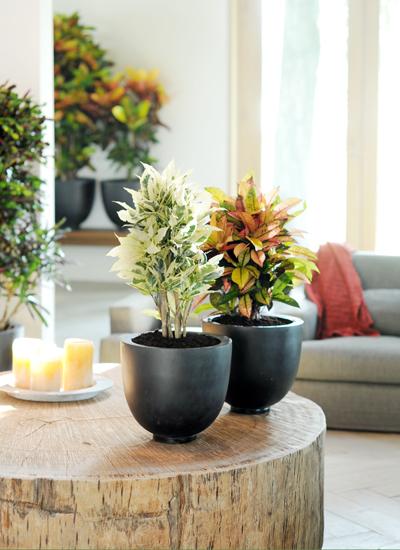 Le croton un rebelle haut en couleurs dossiers - Office hollandais des fleurs ...