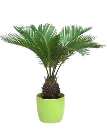 10 plantes vertes pour votre bien tre dossiers. Black Bedroom Furniture Sets. Home Design Ideas