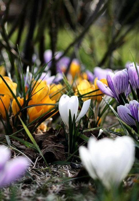 Planter les crocus d'automne | Gamm vert