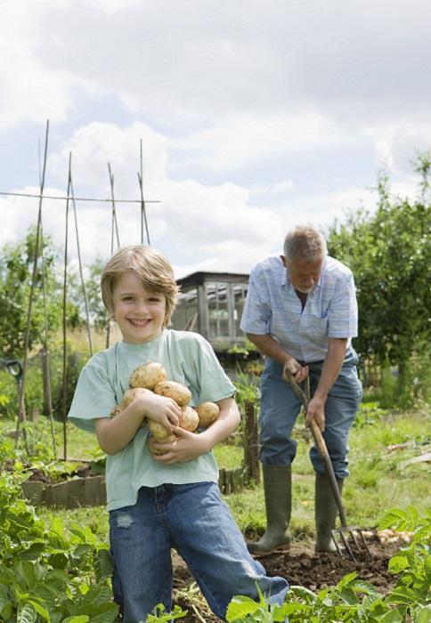 Cultiver Des L Gumes Sous Serre Le Magazine Gamm Vert