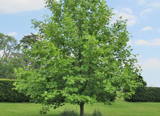 15 plantes pour un jardin anglais dossiers for Concevoir un jardin anglais