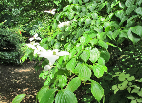 15 plantes pour un jardin anglais dossiers for Plantes vivaces pour jardin anglais