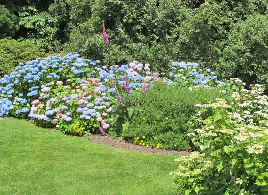 15 plantes pour un jardin anglais dossiers. Black Bedroom Furniture Sets. Home Design Ideas