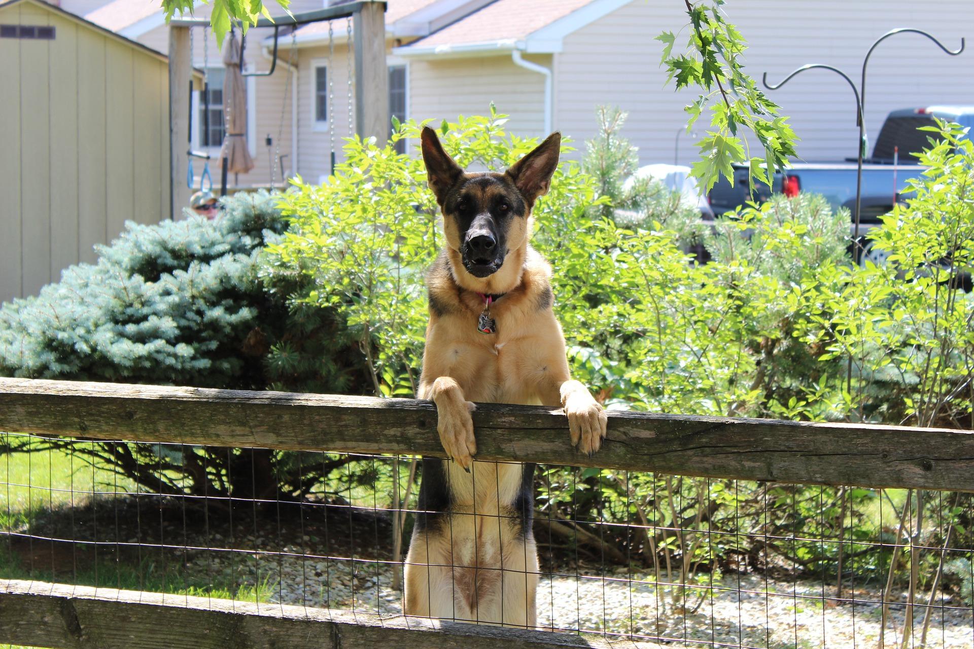 Installer une clôture pour chien | Gamm vert