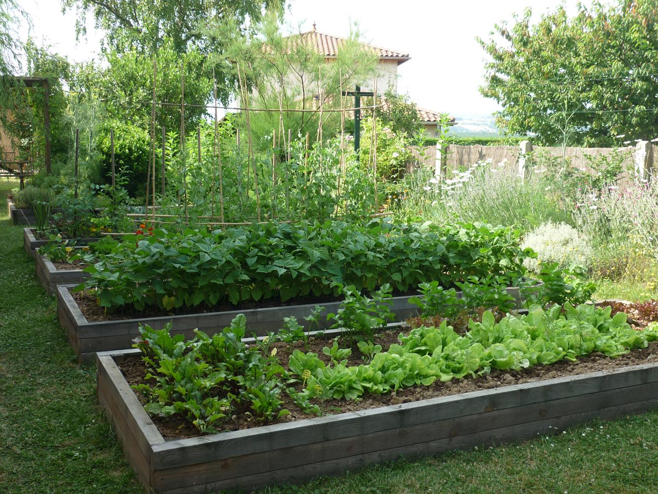 Que Faire Dans Le Potager En Fevrier les meilleurs légumes à cultiver dans sa région | gamm vert