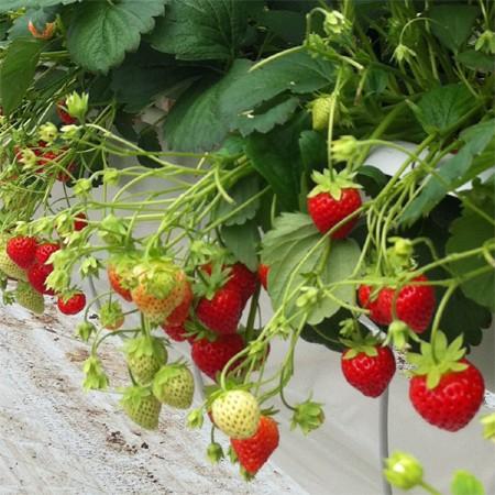 Plantes et jardins for Destockage plantes jardin