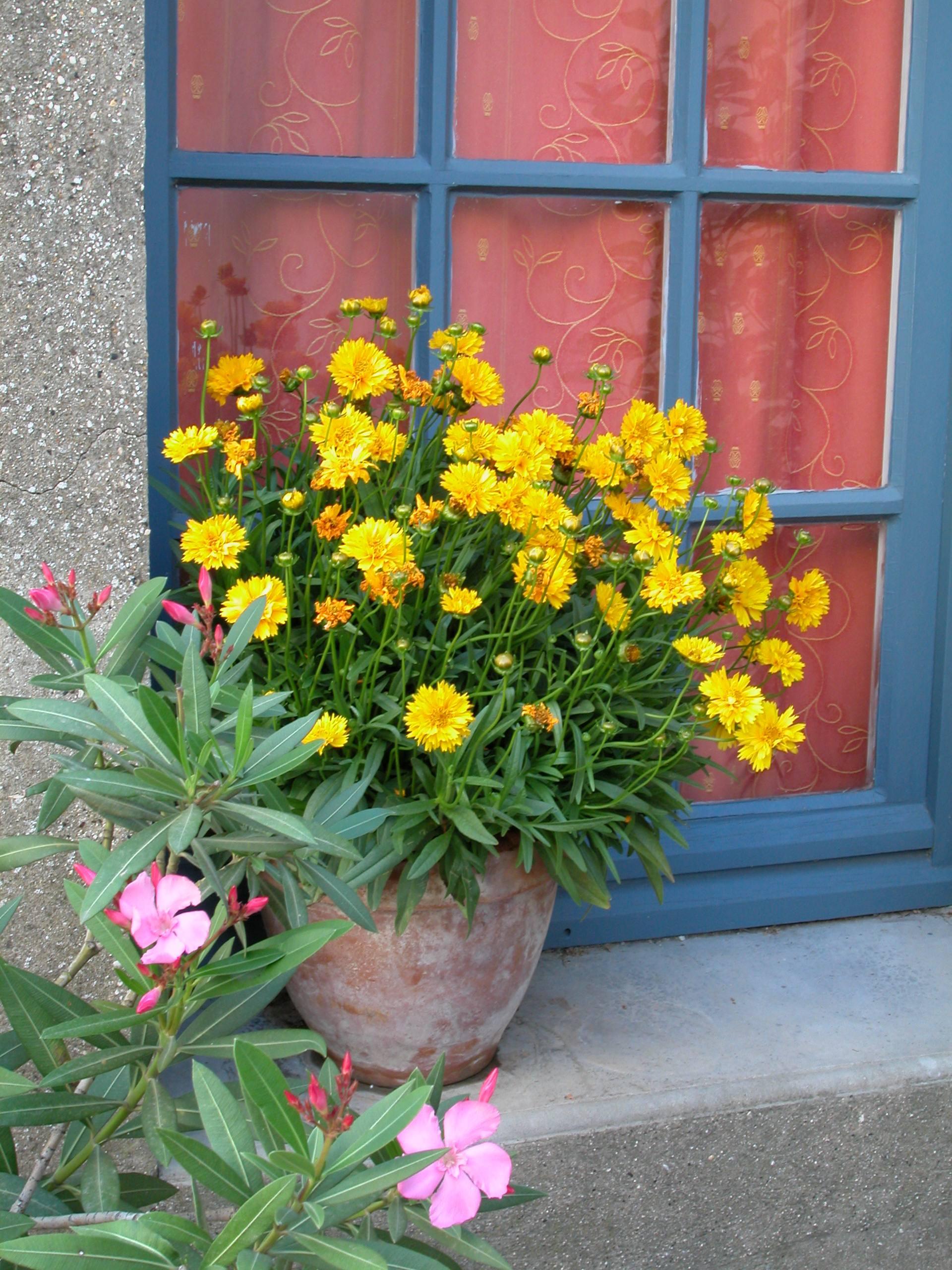 Petites Plantes Fleuries En Pot vivaces en pot osez ! | gamm vert
