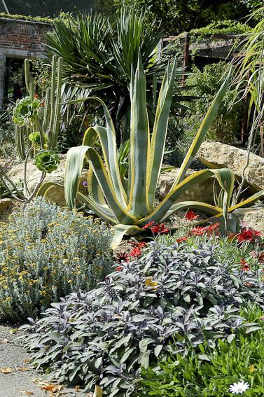 les plantes grasses au jardin gamm vert. Black Bedroom Furniture Sets. Home Design Ideas