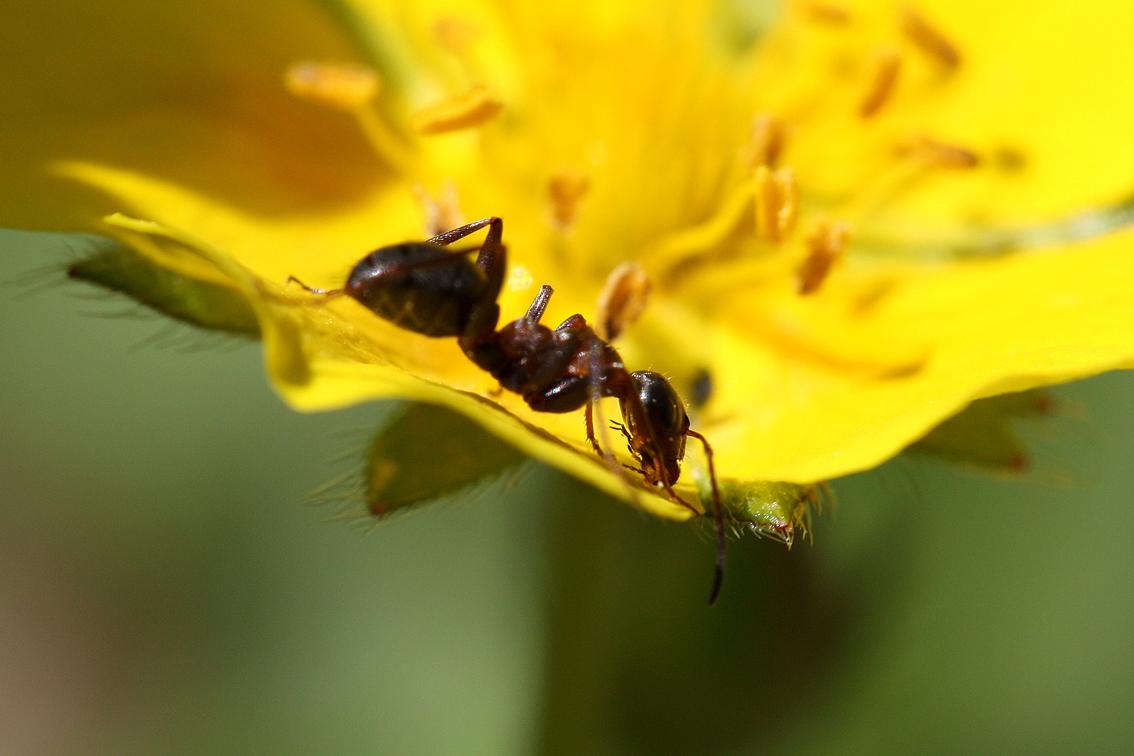 Eloigner Les Fourmis Au Jardin remède naturel numéro 2 : contre les fourmis | gamm vert