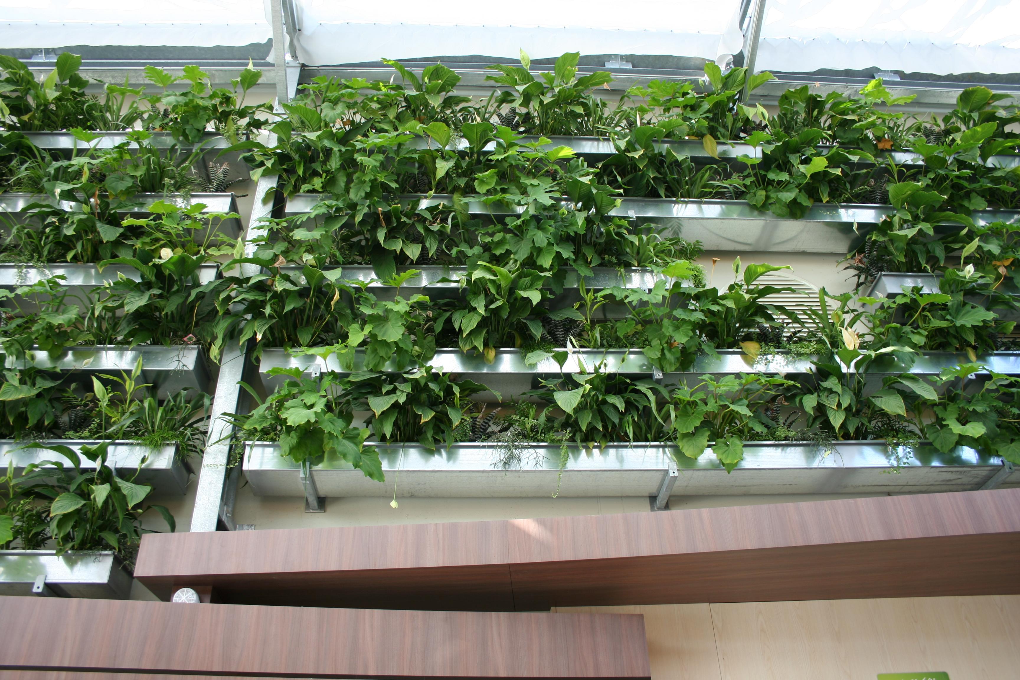 Mur Vegetal Plante Grasse que penser des murs végétaux ? | gamm vert