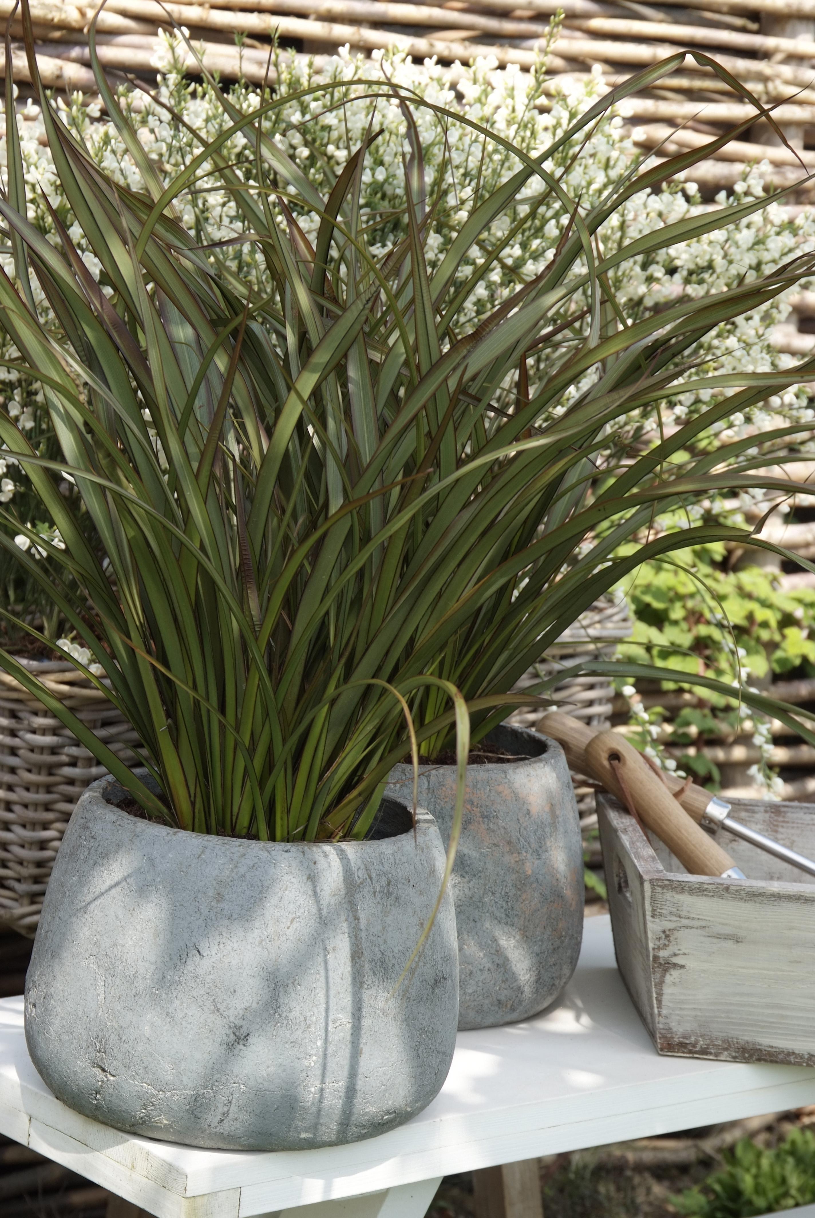 Plantes et jardins for Grande plante verte exterieur