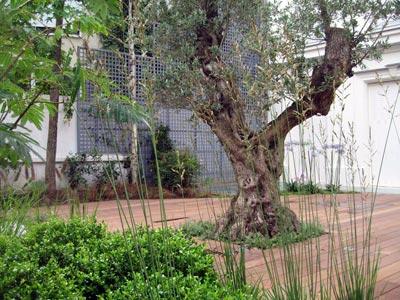 Un jardin parisien contemporain et facile à vivre (Jardins ...