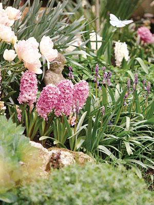 Bulbes de printemps au jardin id es d 39 association - Bulbes a planter au printemps ...