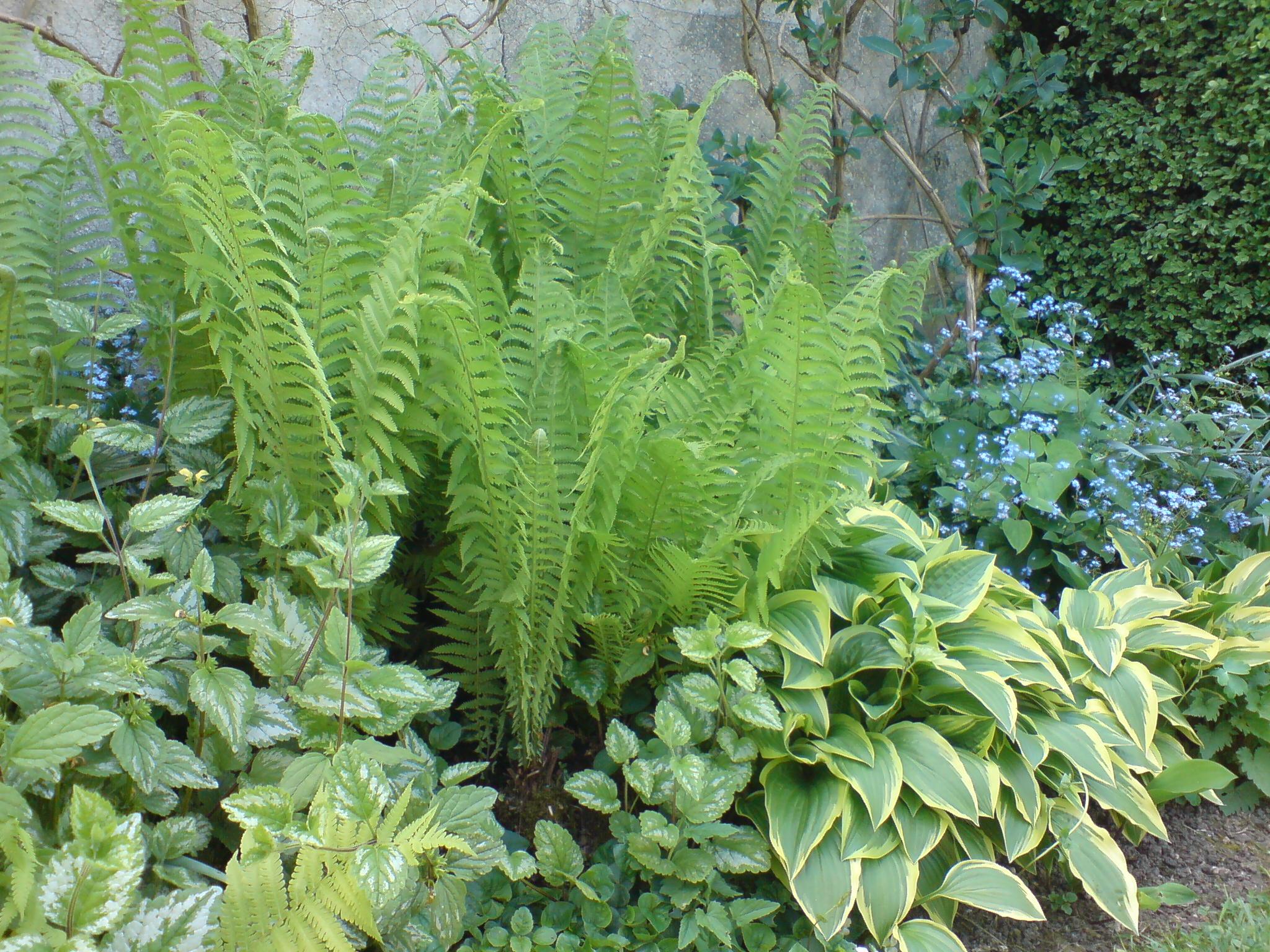 Idee De Plantation Pour Parterre composez un jardin à l'ombre | gamm vert