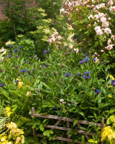 un massif de fleurs pour f ter l 39 arriv e de l 39 t sc nes de jardins. Black Bedroom Furniture Sets. Home Design Ideas