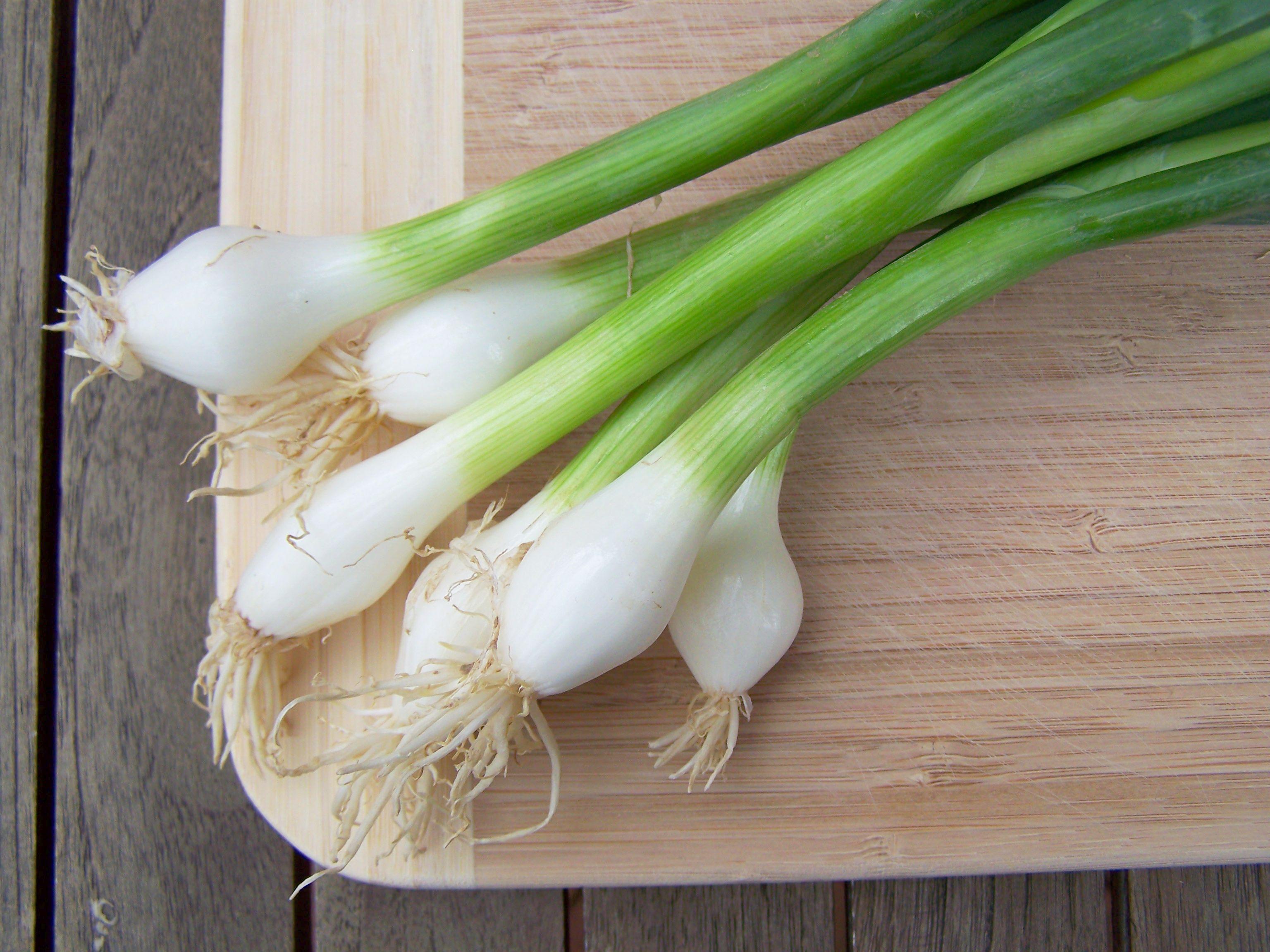 Oignon Blanc A Planter entretien des oignons | gamm vert