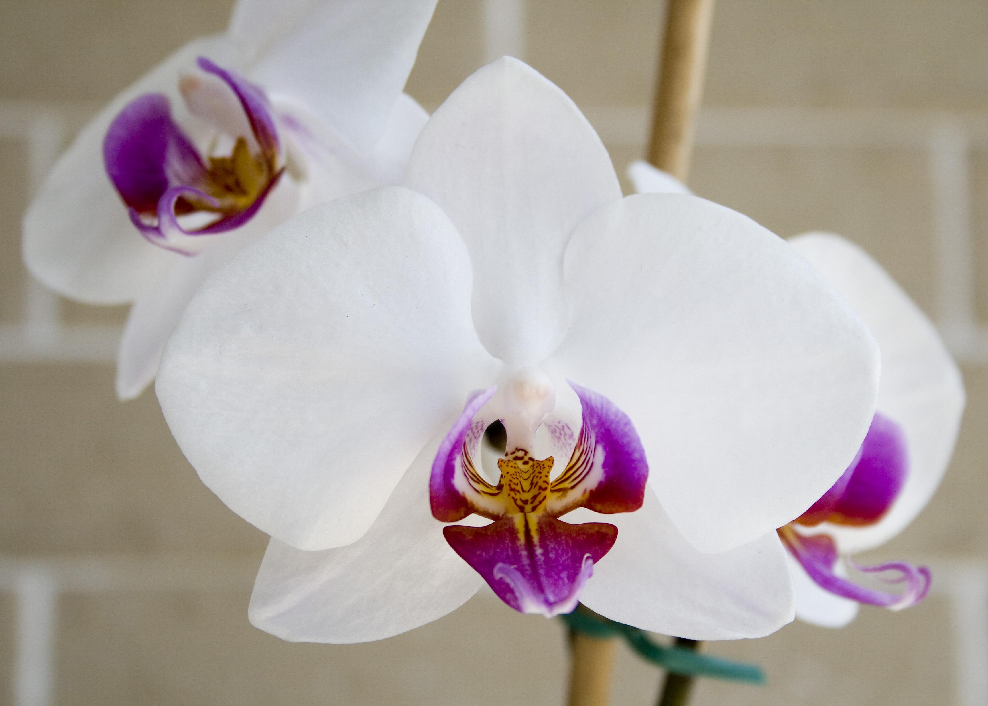 Comment S Occuper D Un Orchidée osez les orchidées ! | gamm vert