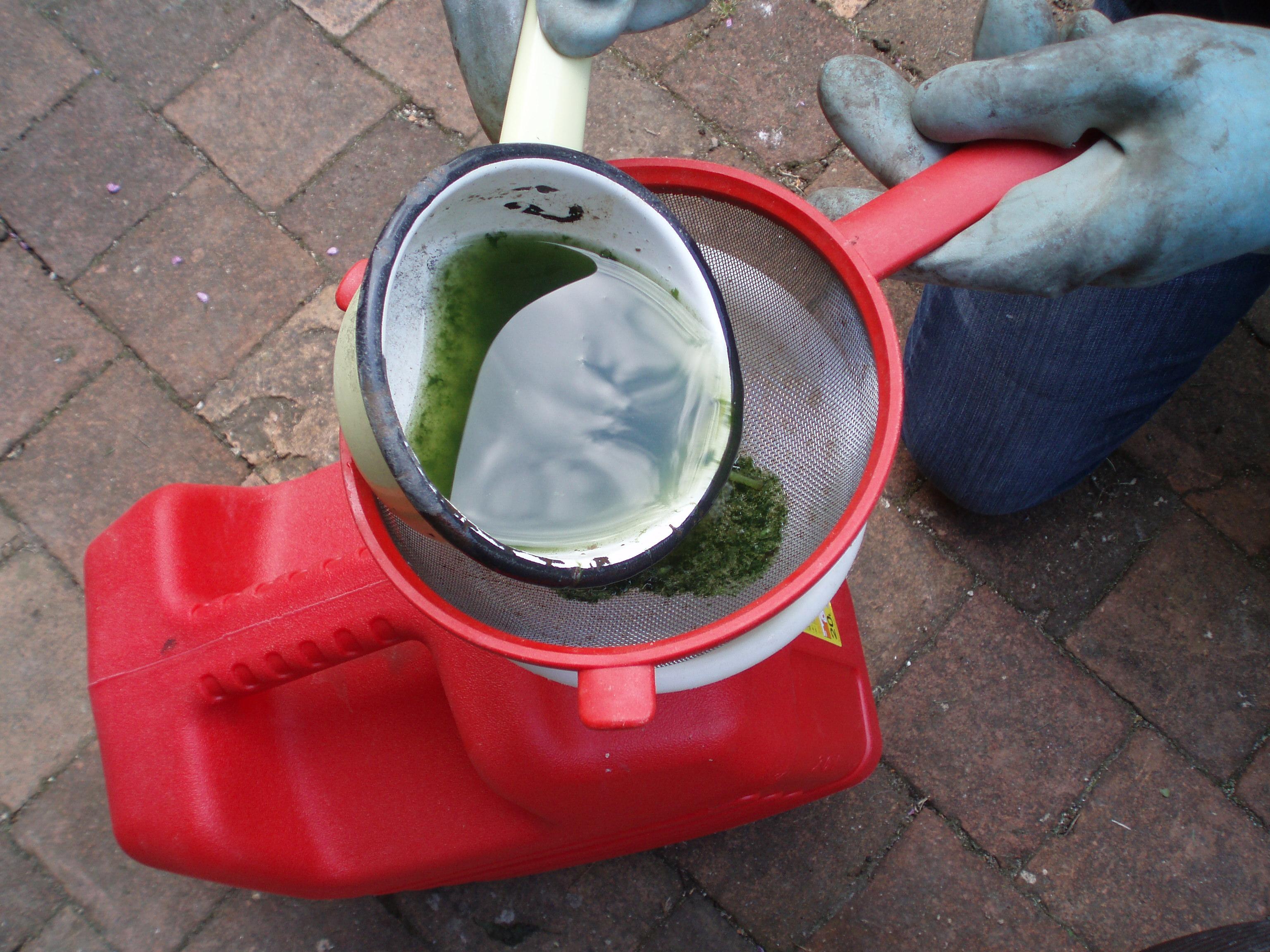 Plantes et jardins - Quand utiliser le purin d ortie ...