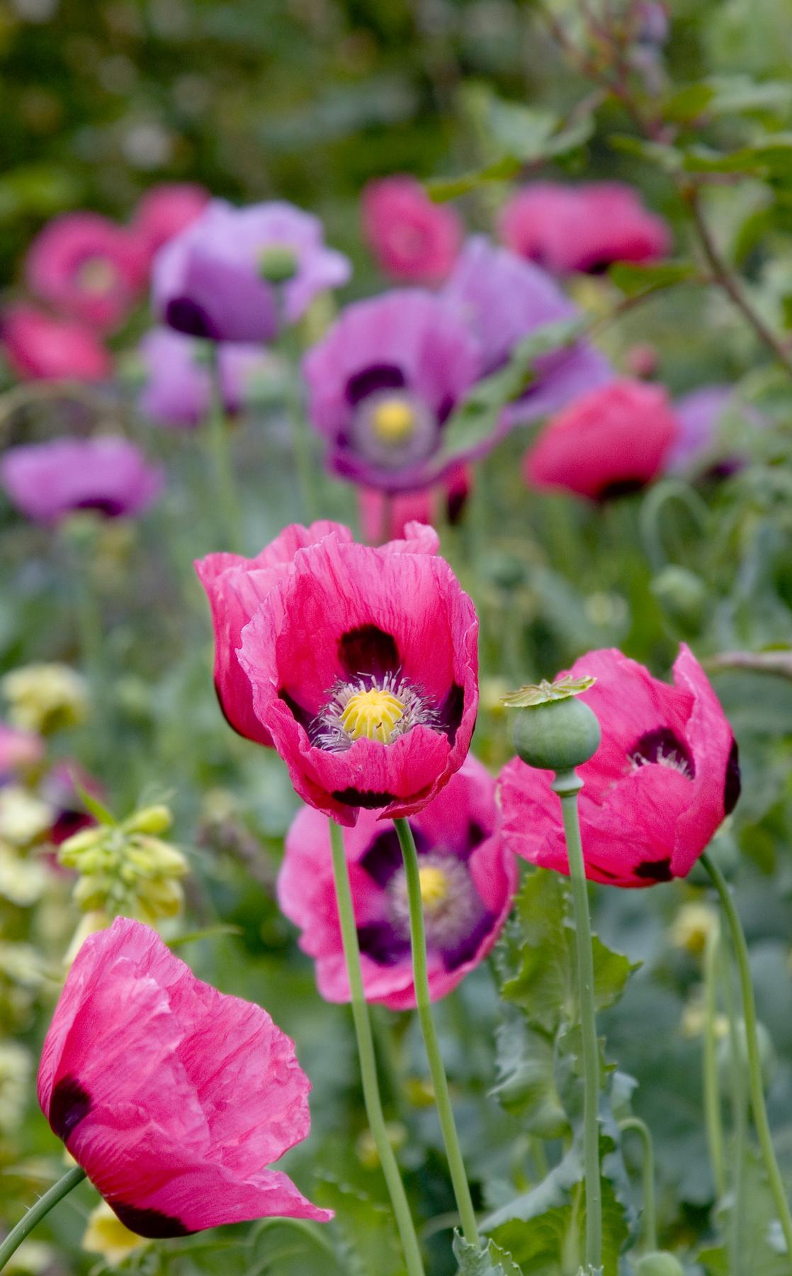 Arbuste Pour Terrain Calcaire jardiner en sol calcaire | gamm vert