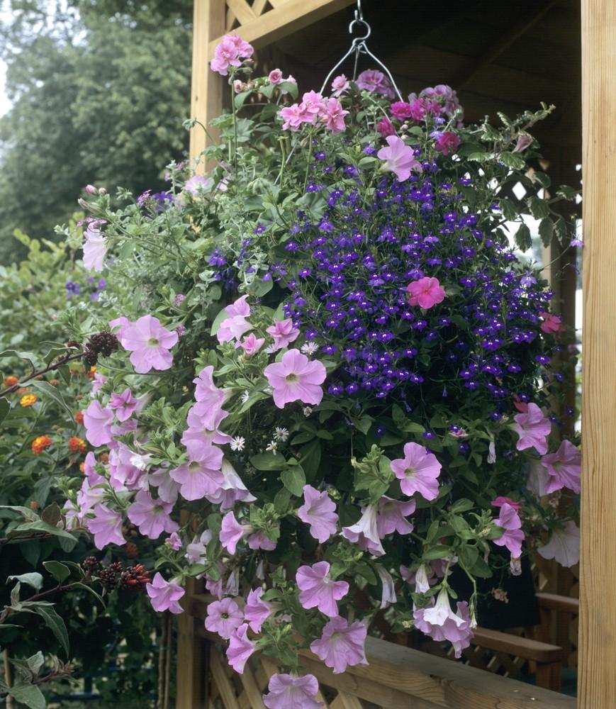 Petites Plantes Fleuries En Pot 12 fleurs pour créer les plus belles suspensions | gamm vert