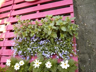 La terrasse de 4 sous dossiers - Planche de terrasse pas cher ...