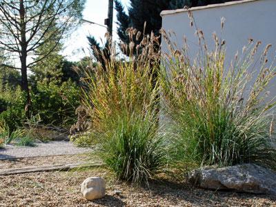 Un jardin m diterran en sans arrosage jardins de paysagistes for Plante exterieur sans entretien
