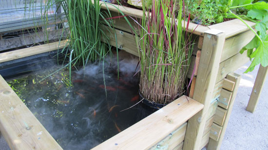 des poissons rouges ou des truites - Lit A Eau Avec Poisson