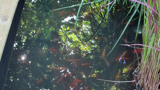 L 39 aquaponie ou l 39 art de marier potager et bassin dossiers for Nourrir des poissons rouges