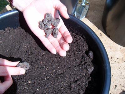 Comment planter des bulbes fleurs en pot dossiers - Comment planter des dahlias ...