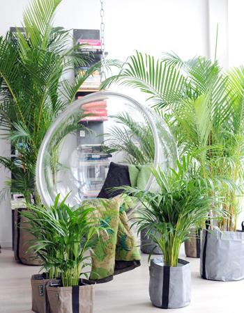 10 plantes vertes pour votre bien tre dossiers for Grandes plantes vertes pas cheres
