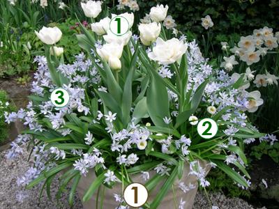 des bulbes 224 fleurs en pot trio ch 234 tre sc 232 nes de jardins