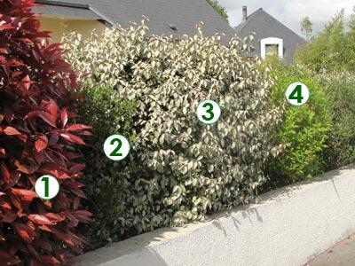 Une haie contrast e pour petit jardin sc nes de jardins - Haie champetre persistant ...