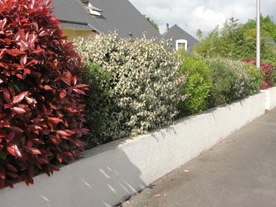 une haie contrast e pour petit jardin sc nes de jardins. Black Bedroom Furniture Sets. Home Design Ideas