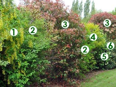 Une haie champ tre tr s d corative sc nes de jardins for Haie jardin anglais